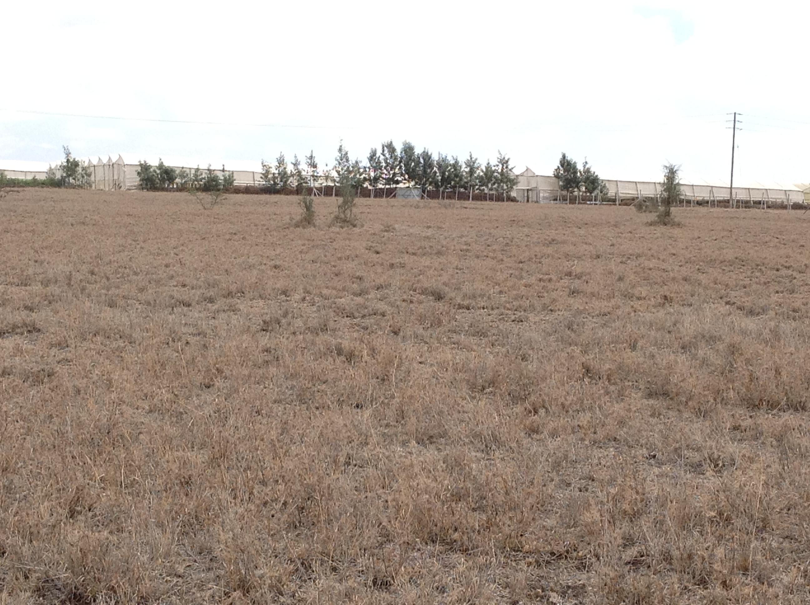 Kisanju plots 1/4 acres